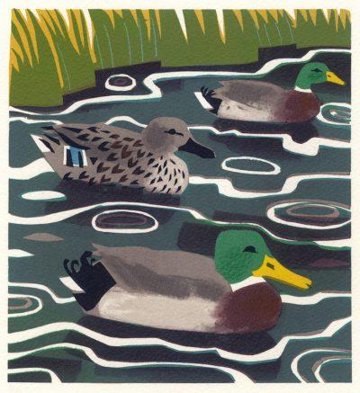 Mallard Print by Carry Akroyd
