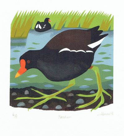 Moorhen Print by Carry Akroyd