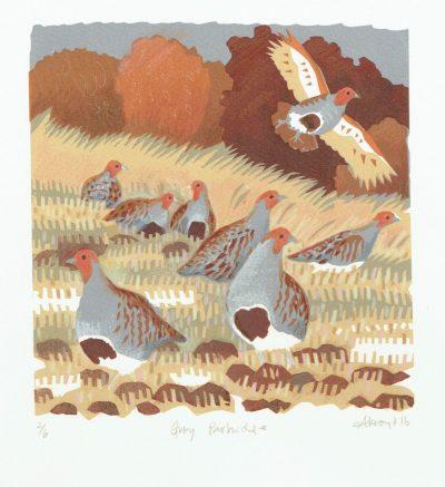 Grey Partridge Print by Carry Akroyd