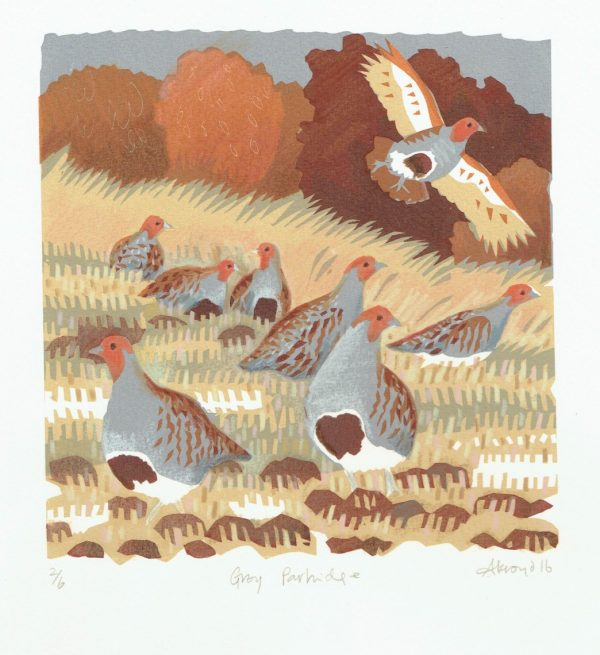 Grey Partridge Print by Carry Akroyd