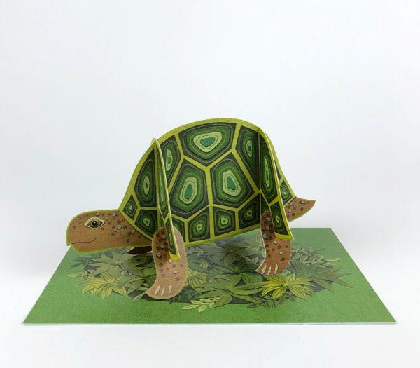 Alice Melvin Tortoise