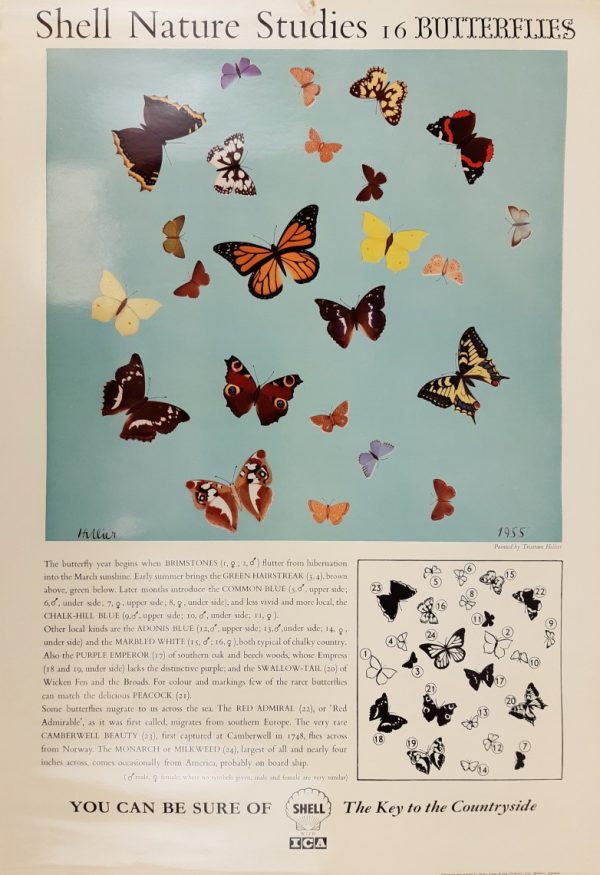 Shell Nature Butterflies