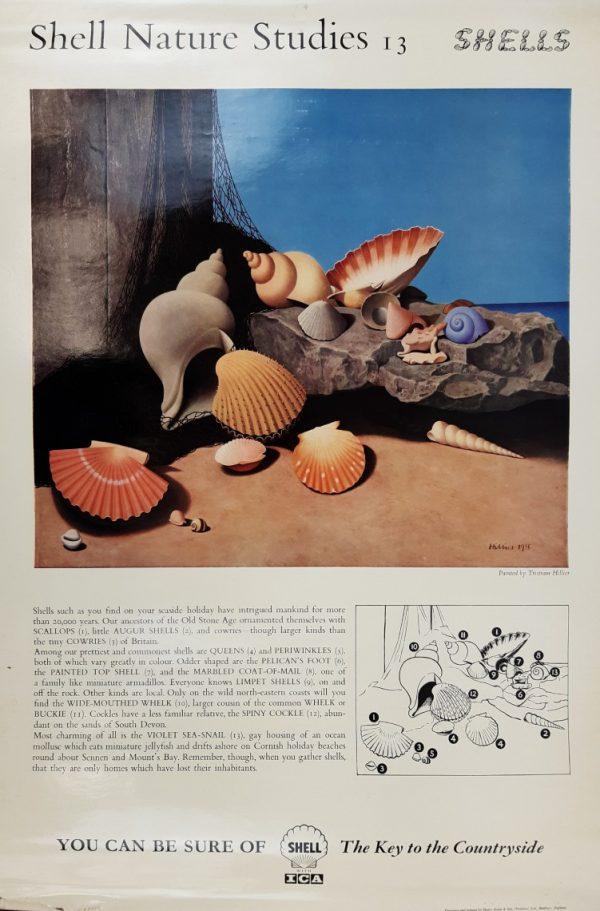 Shell Nature Shells