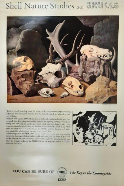 Shell Nature Skulls