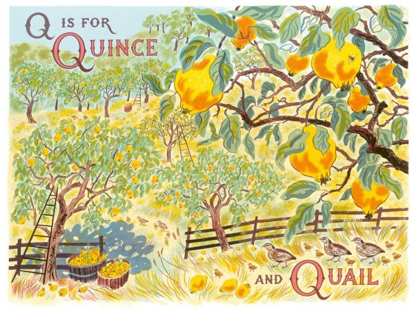 Q is for Quince